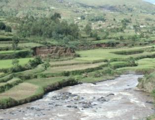 マダガスカルの棚田1