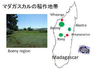 マダガスカル稲作地帯とブエニイ