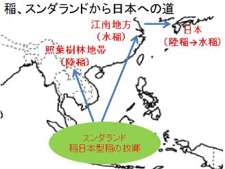 稲の日本への道