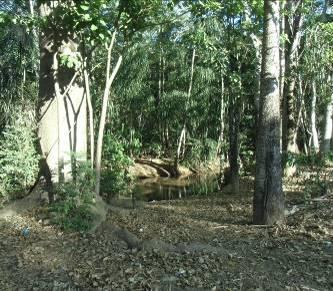 マダガスカルの森1