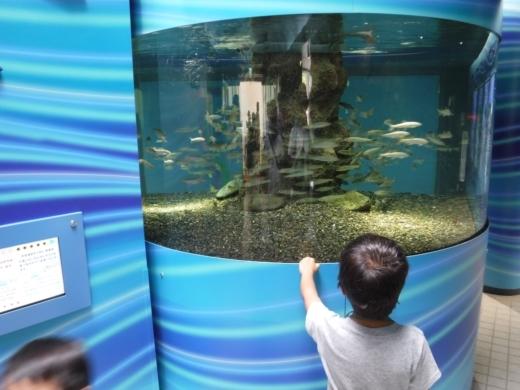 さいたま水族館 (20)