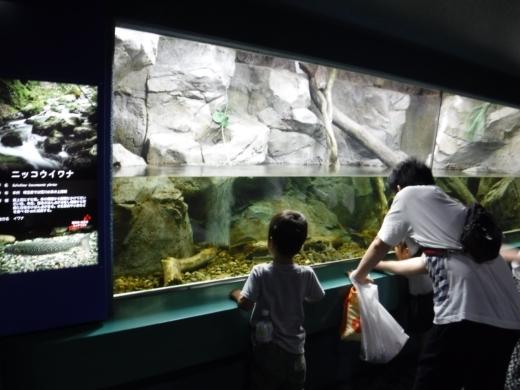 さいたま水族館 (23)