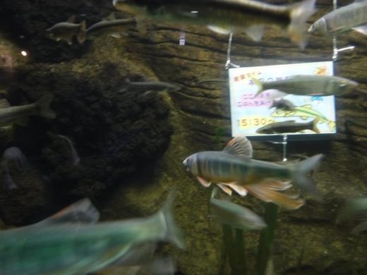 さいたま水族館 (26)