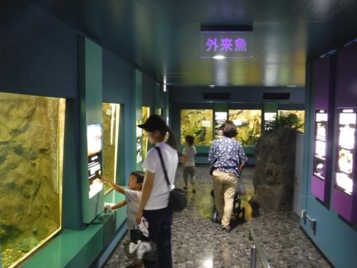 さいたま水族館 (34)