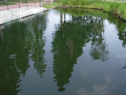 さいたま水族館 (45)