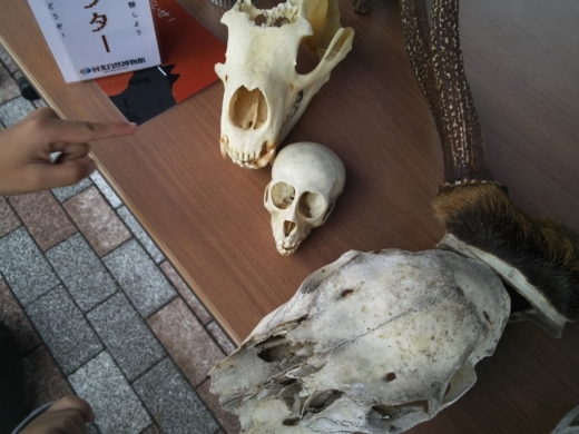 栃木自然博物館 (1)