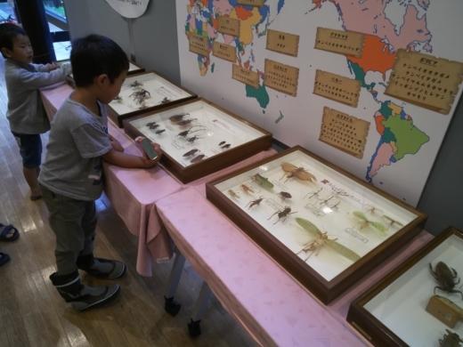 栃木自然博物館 (5)