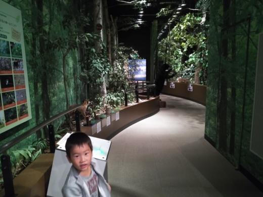 栃木自然博物館 (7)