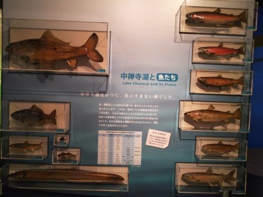 栃木自然博物館 (11)