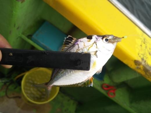 ③初船釣り (25)