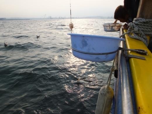 ③サメ釣れた (1)