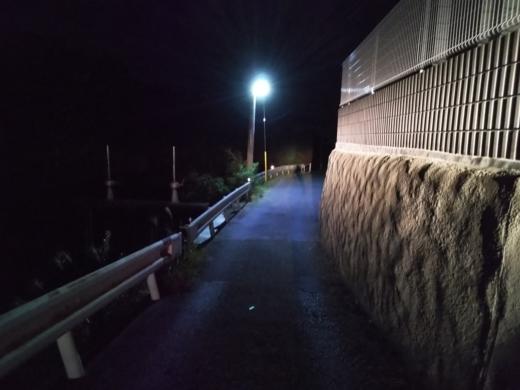 冨浦漁港で釣り (7)