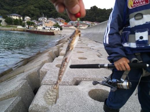 冨浦漁港で釣り (18)