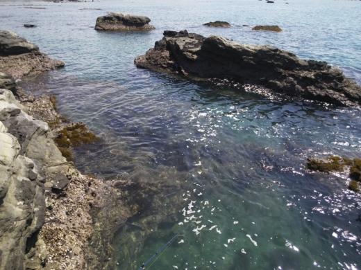 冨浦漁港で釣り (51)