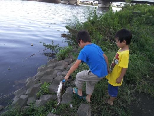中川(三郷)釣り (17)