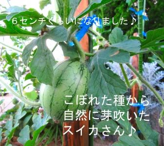 IMG_1657@@.jpg