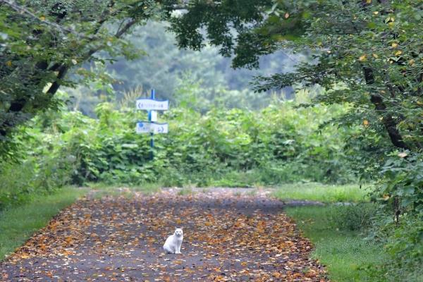 M池の白ネコ20170907