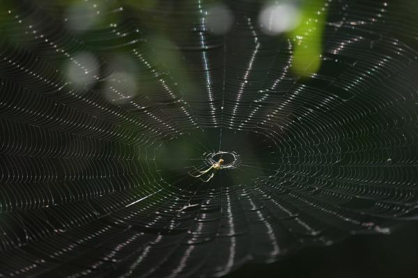 蜘蛛の巣20170913-2
