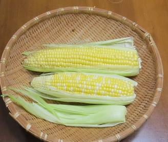 トウモロコシ収穫物7月