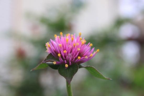鉢植え_3592 (3)