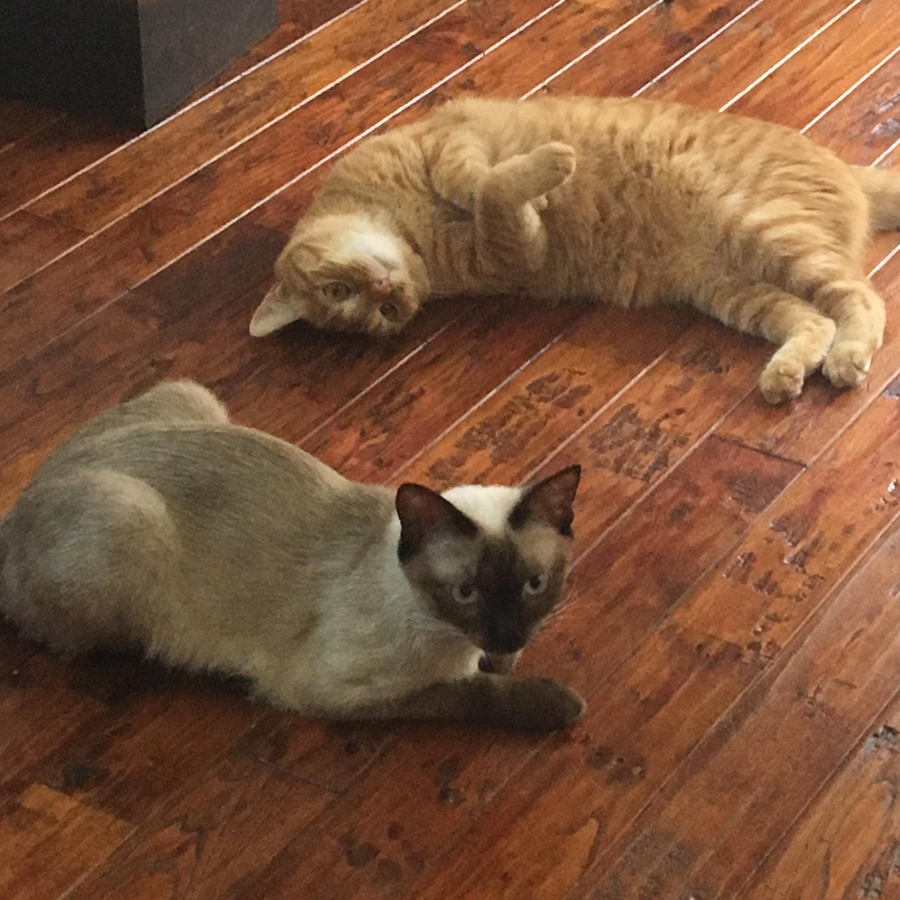 捨て猫だったけどココロもカラダも完全飼い猫