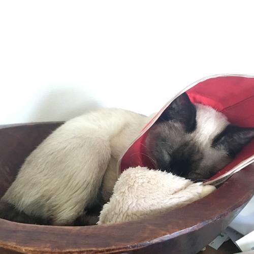 捨て猫ナイーブちゃんのエリカラ難民