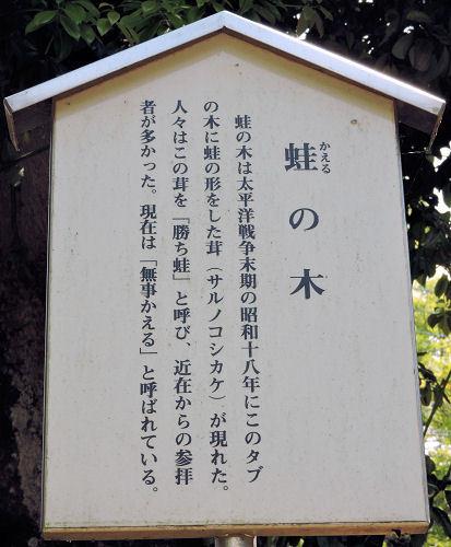 170711nukisaki19.jpg