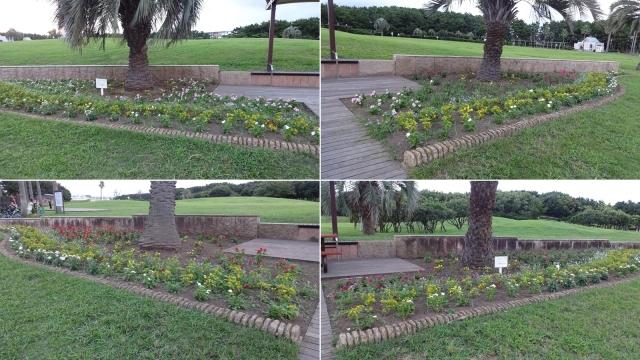 31日の夕方対に植えられている花壇2組