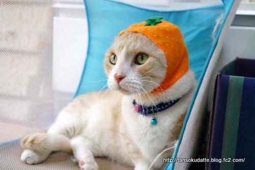 フルーツなネコ