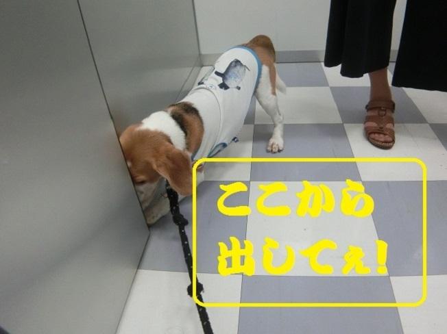 CIMG6303改