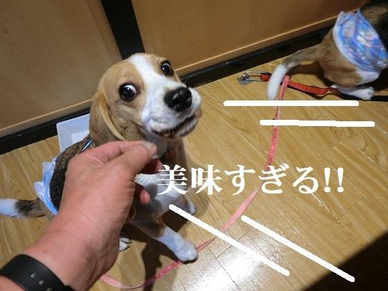CIMG3617③