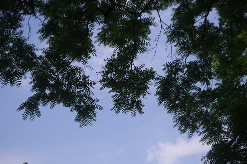 IMGP3469-1.jpg