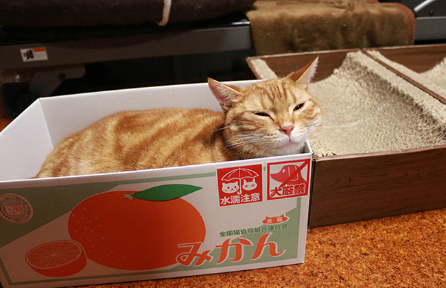 blog_000010141.jpg