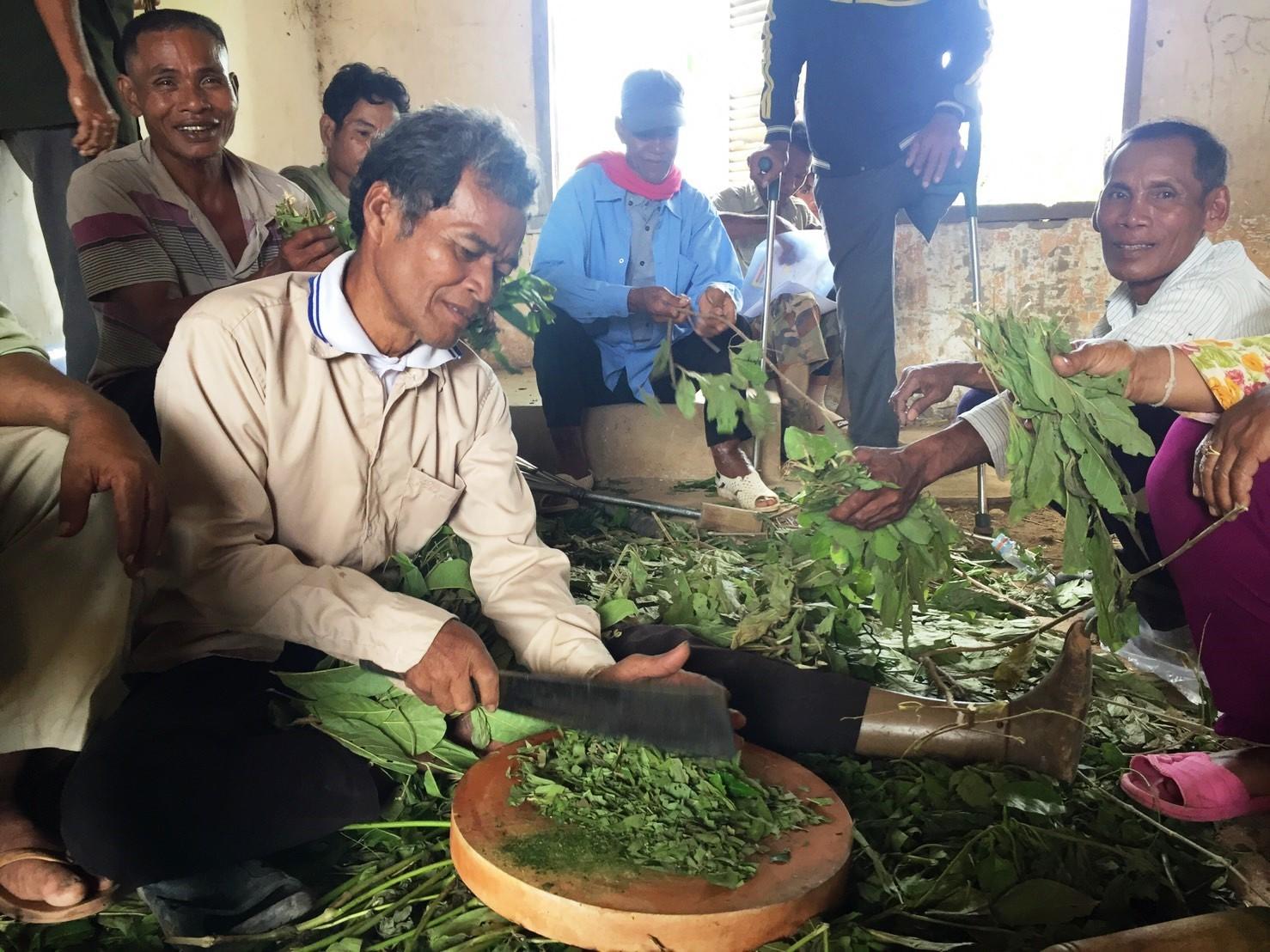 自然農薬作りのために薬草を刻む地雷被害者