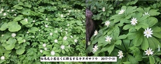 7_31猿倉バイクラン白馬尻まで (4) (520x208)