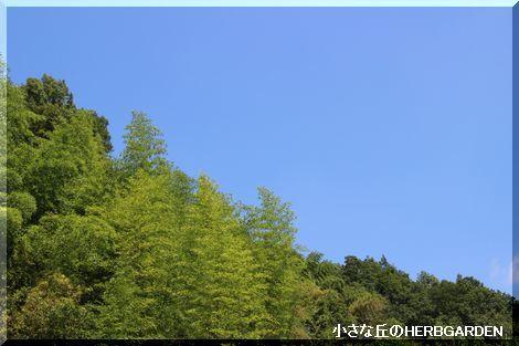 470 木々