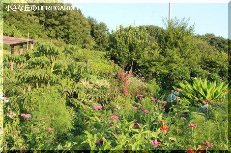 470 garden畑と丘の上の木々達