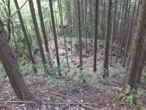 籾井城/08西曲輪堀切上から