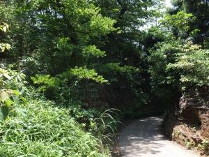 新井城/千駄櫓