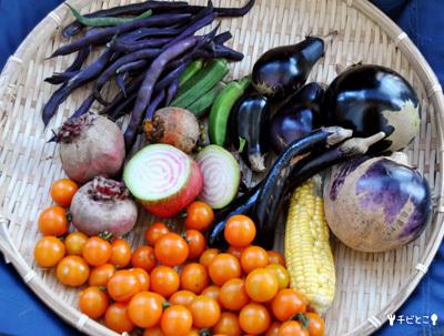 お野菜の収穫