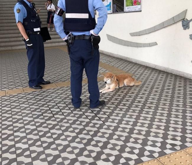 犬に説教する警察