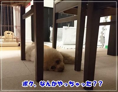 DSC_3126 (2)