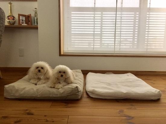 niche 雑貨+犬服=ニーシェ リネンベッド 1