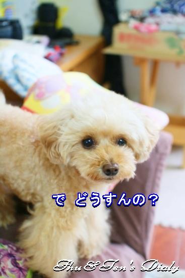 005aIMG_5549.jpg