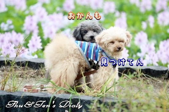 006aIMG_5637_20170906214349ddc.jpg