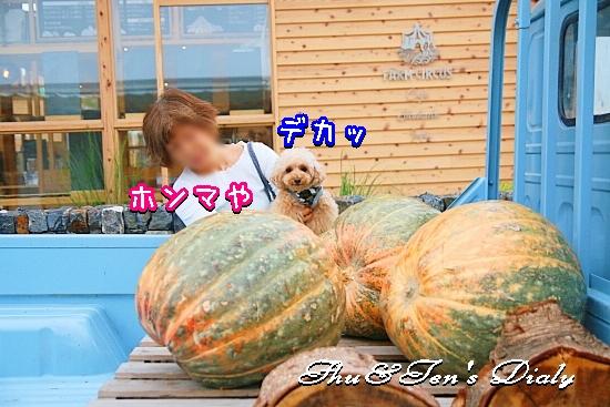 006aIMG_6047.jpg