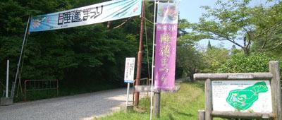 713 極楽寺睡蓮