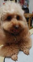 性格変わる犬3