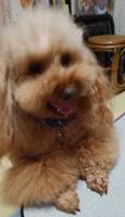 性格変わる犬4
