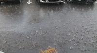 一瞬の雨b